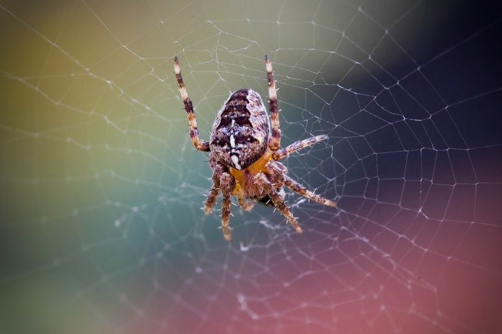 Spider-Web-Net-Insect-485x728